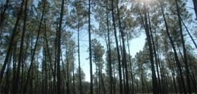 Au cœur de la forêt landaise