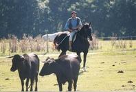 Jan à cheval - Ganaderia de Buros