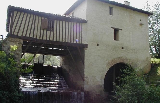 Etang de pêche de La Gaube 4 - Arthez-d'Armagnac